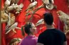 bakonyi-termeszettudomanyi-muzeum-01.jpg