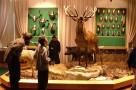 bakonyi-termeszettudomanyi-muzeum-07.jpg