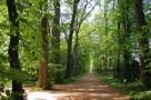 zirci-arboretum-09.jpg