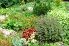 zirci-arboretum-16.jpg