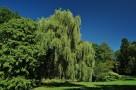 zirci-arboretum-18.jpg