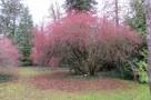 zirci-arboretum-19.jpg