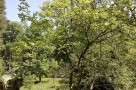 zirci-arboretum-21.jpg