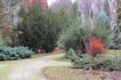 zirci-arboretum-23.jpg